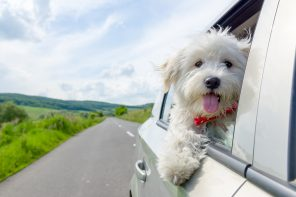 Have dog, will travel: The 35 best dog-friendly hotels in the UK