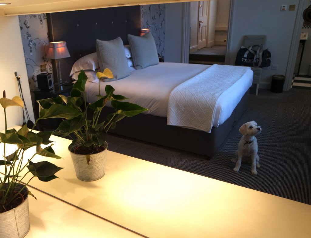 Again  Flora was made to feel super welcome  and the hotel had placed a  comfy dog bed in our room  along with dog food  treats  poop bags and a toy The 35 best dog friendly hotels in the UK  Have dog  WILL travel . Dog Friendly Places To Stay Bath. Home Design Ideas