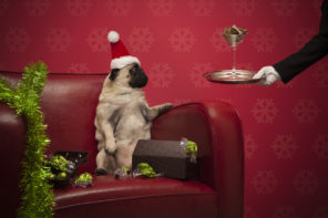 10 festive ways to celebrate the season in London with your dog
