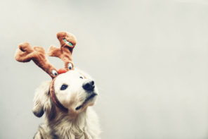 Pawsome advent calendars, Christmas crackers and gifts for pets